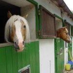 Pferdepension_001