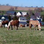 Pferdepension_003